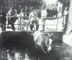paard-in-de-sloot-kerklaan-19601