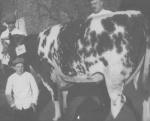 Arie Rip rond 1930 bij slager van Selm