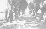 Laantje van Rip 1950