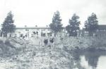 Tuindorp, koeien waar nu Churchillaan
